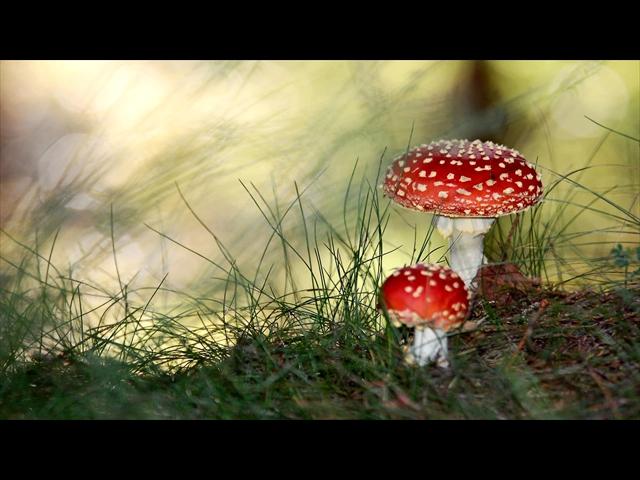 Mushroom-1920x1080